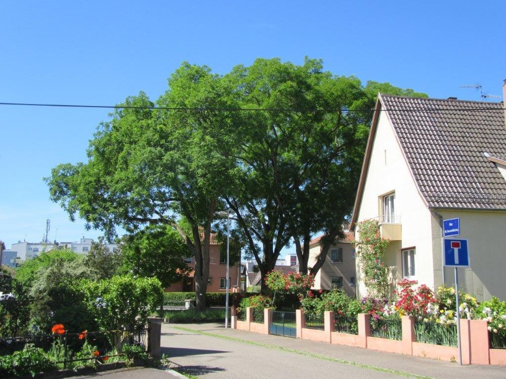 La maison et le lotissement pour construire la ville – découverte du quartier Saint-Antoine et ses alentours