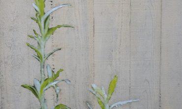 Ingrid Rodewald – Grüne Mauern. Mauerpflanzen am Bahnhof Kehl