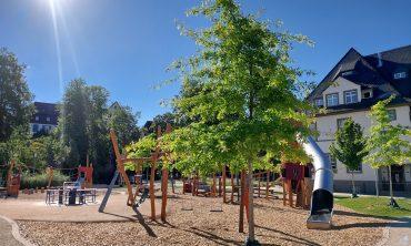 Baum2og – Stadtbäume im Klimawandel Neue Alternativen zur Sicherung der Grünstruktur in der Stadt